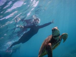 海亀と宮古島で