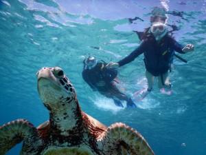 海亀と、こんな近く