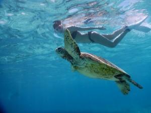 宮古島で海亀と泳げる