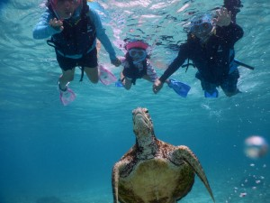 五歳でシュノーケルで海亀
