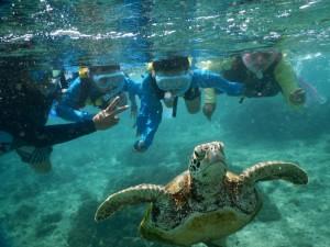 こんな近くに海亀が