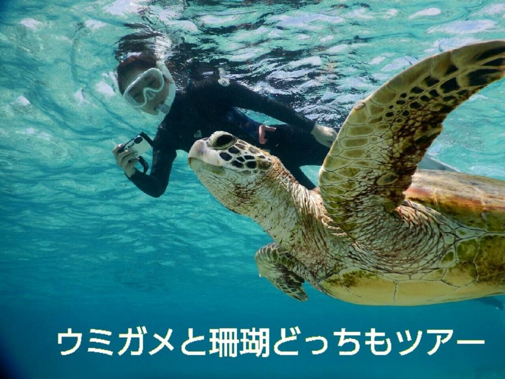 ウミガメと珊瑚どっちも