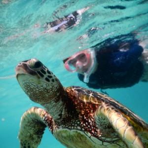 宮古島海亀と泳ぐ