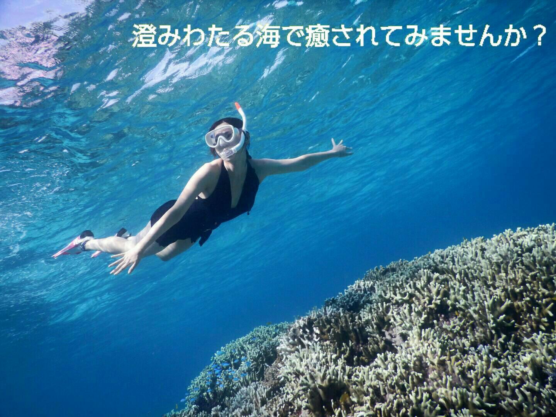 珊瑚のシュノーケリング