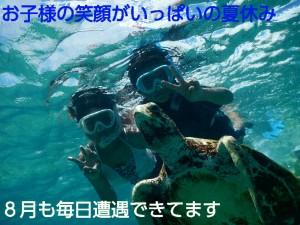 8月シュノーケリングで毎日ウミガメ
