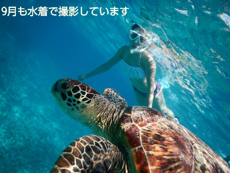 宮古島ウミガメと泳ぐ写真は9月も水着