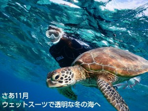 澄みわたる11月の宮古島の海にシュノーケリングでウミガメフォト
