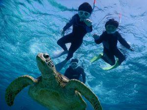 躍動感が伝わる宮古島ウミガメとシュノーケルツアー