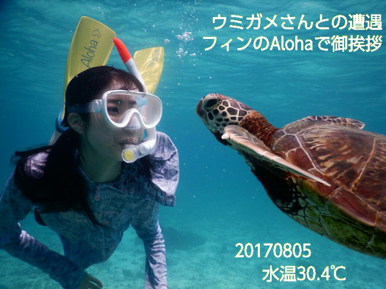 宮古島ウミガメと遭遇