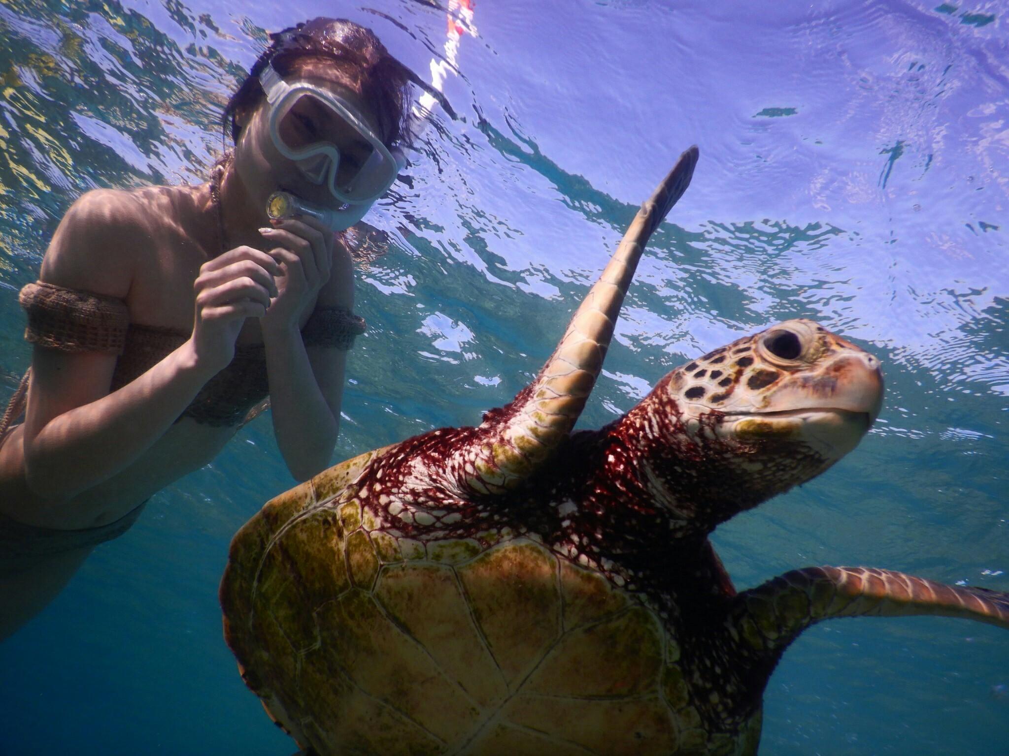 宮古島でウミガメに会いたいと願う