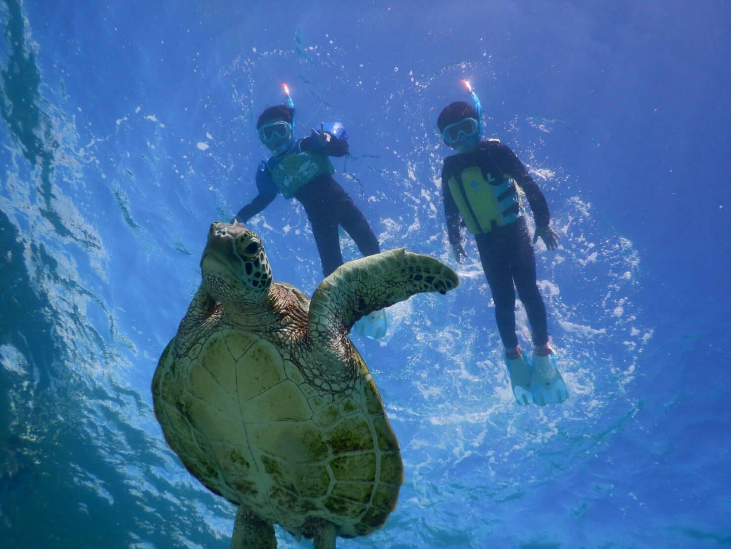 子供も宮古島でシュノーケリングでウミガメに会える