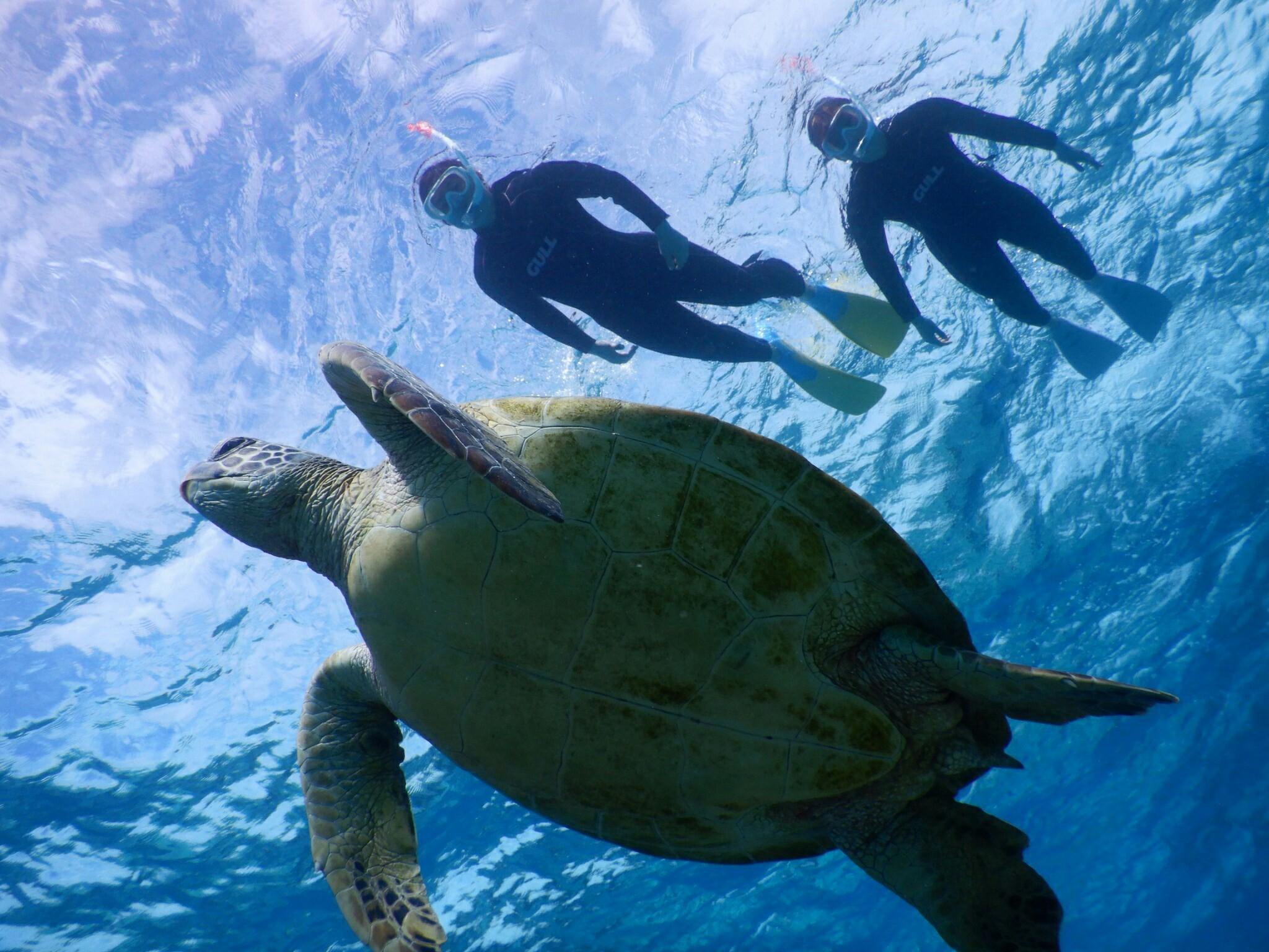 晴れたら宮古島でシュノーケルしましょうウミガメとね