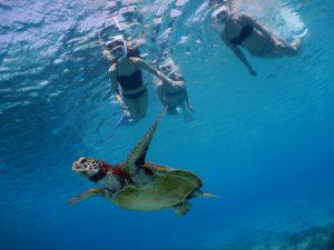 美女が3人でウミガメとビキニでシュノーケリング