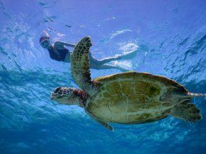 3月のウミガメと春の宮古島シュノーケリング