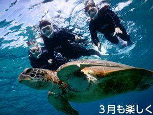 3月の宮古島で楽しくウミガメさんとシュノーケル