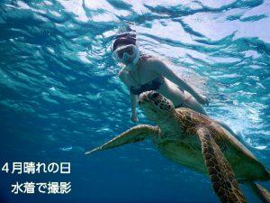 スタイル抜群のビキニで宮古島ウミガメ