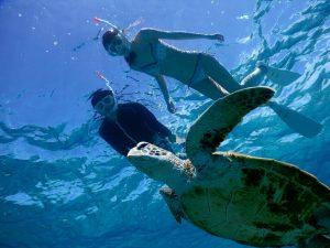 宮古島で下からウミガメ撮影