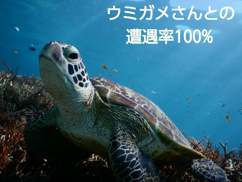 宮古島でウミガメ遭遇率100パーセント