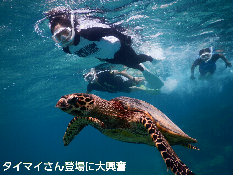 宮古島ウミガメツアーでタイマイに遭遇