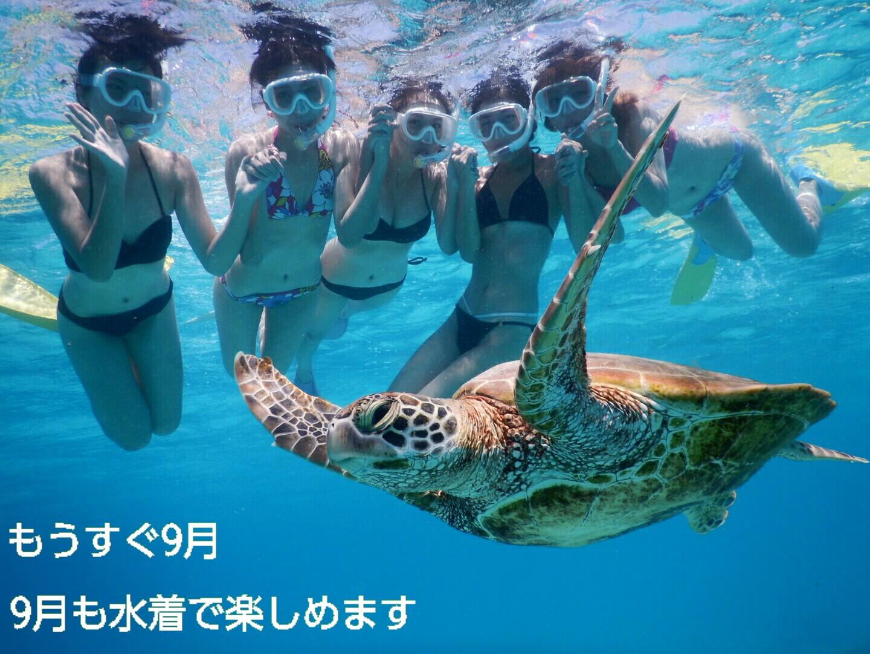 9月の宮古島も水着でウミガメ