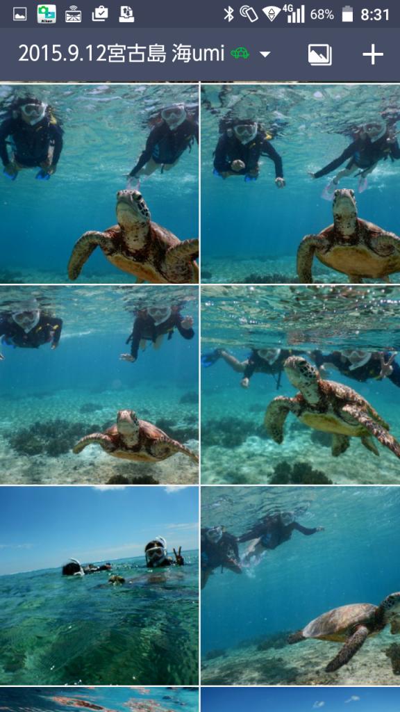 海亀写真プレゼント