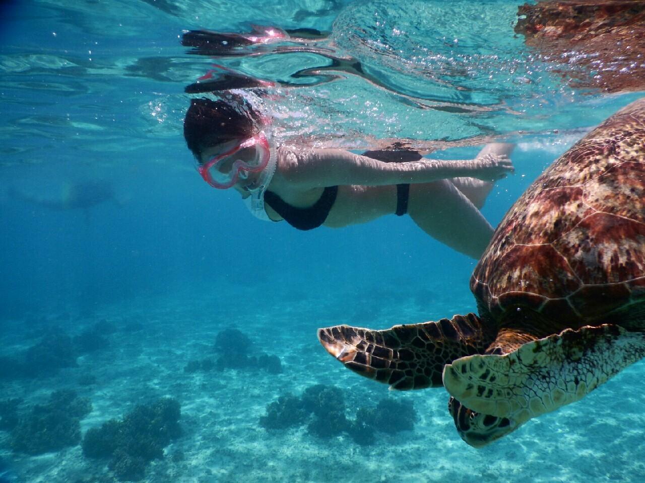 ビキニで美女がウミガメに接近