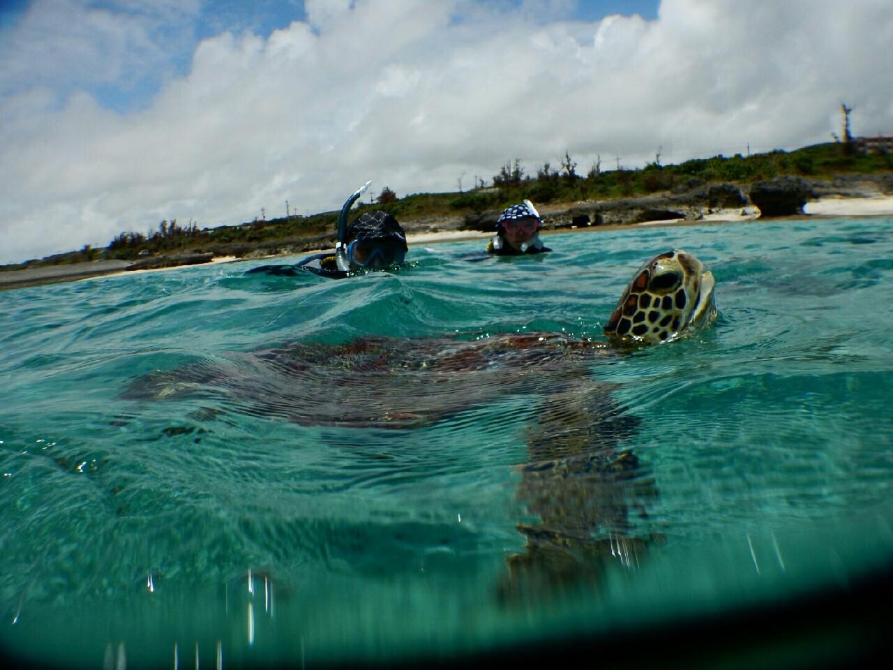 宮古島のウミガメの息継ぎ