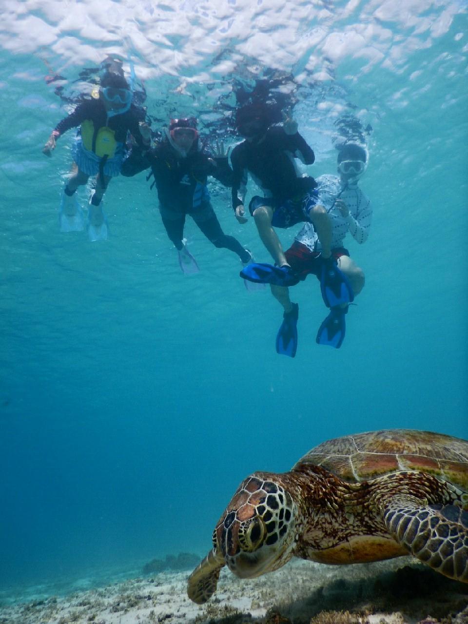 宮古島家族旅行で初ウミガメ
