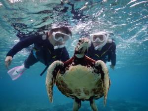 シュノーケルでウミガメと近づく