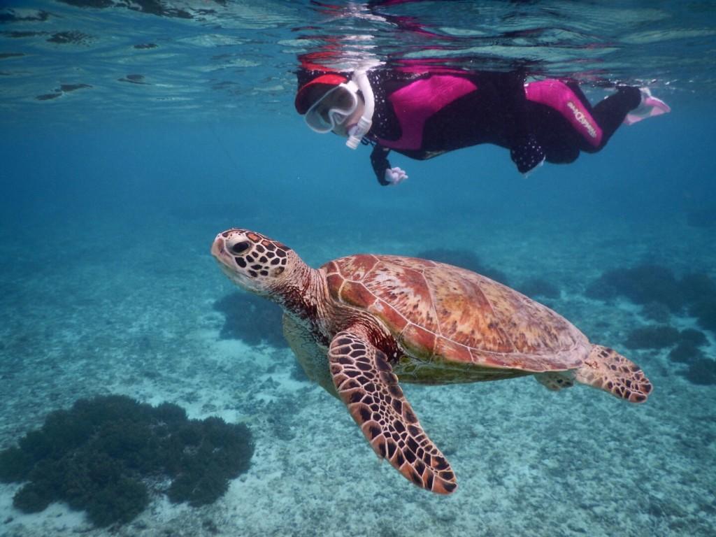 日焼け対策は万全にウミガメとシュノーケル