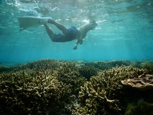 シュノーケルで珊瑚の上を飛ぶ
