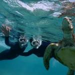 亀の息継ぎをシュノーケルで見る