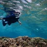 サンゴをじっくり見るシュノーケルツアー