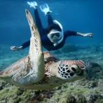 白いウミガメとシュノーケル
