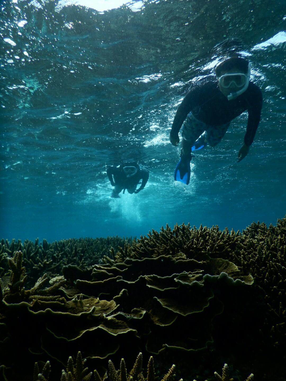 美し過ぎる珊瑚シュノーケル