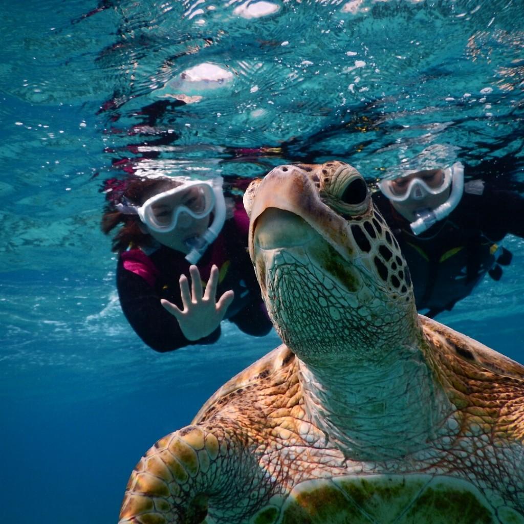 ウミガメに手をふるシュノーケルツアー