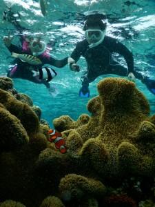 カクレクマノミと写真が撮影出来るシュノーケルツアー