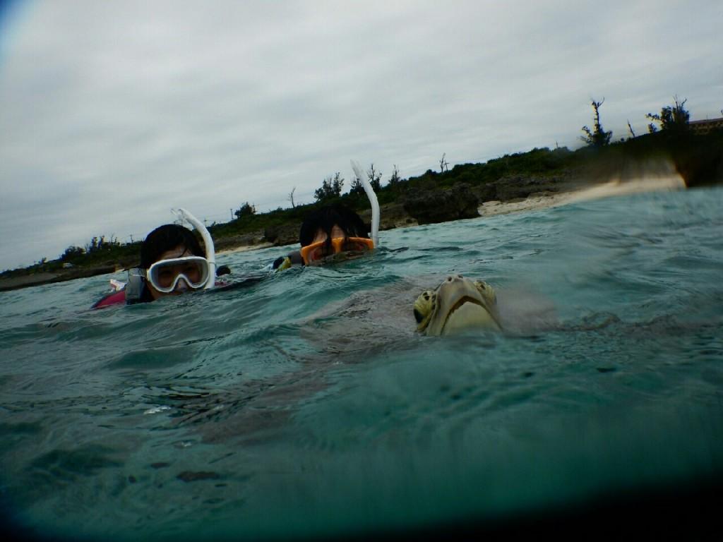 シュノーケルでウミガメ接近で息継ぎ