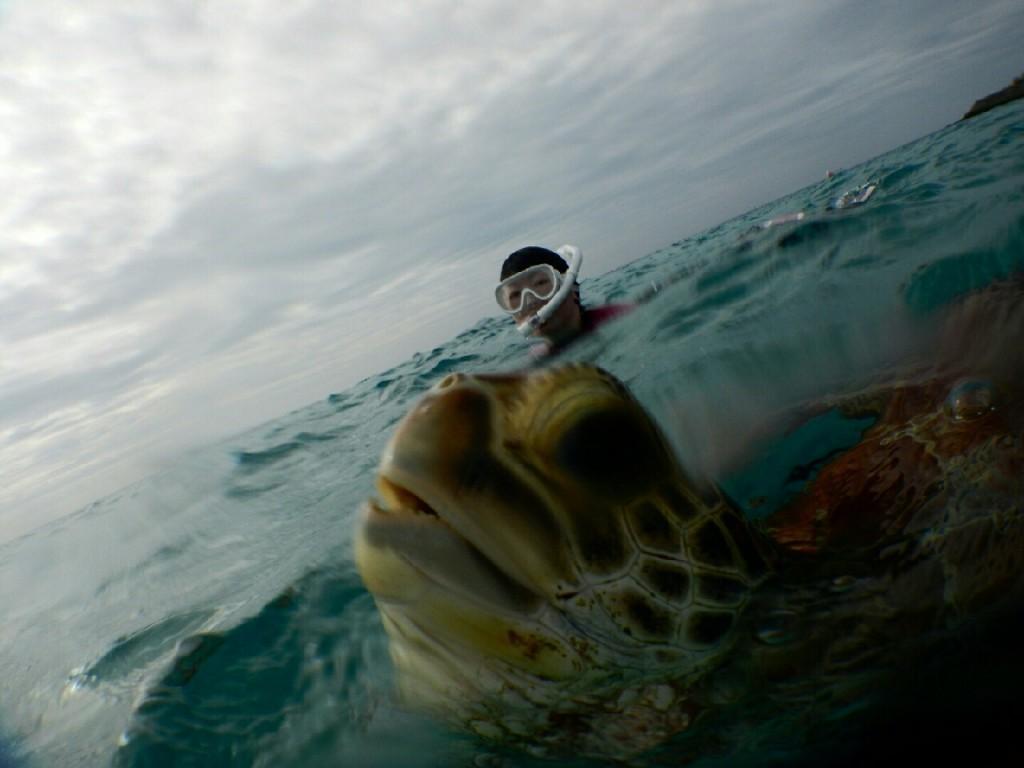 シュノーケルツアーでウミガメの息継ぎ