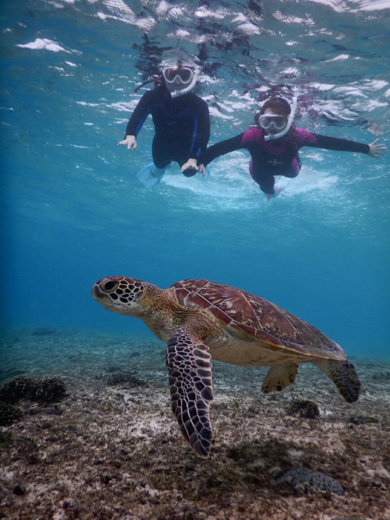 透き通る海でウミガメシュノーケルツアー