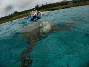 ウミガメツアーで息継ぎも初めて見れたよ