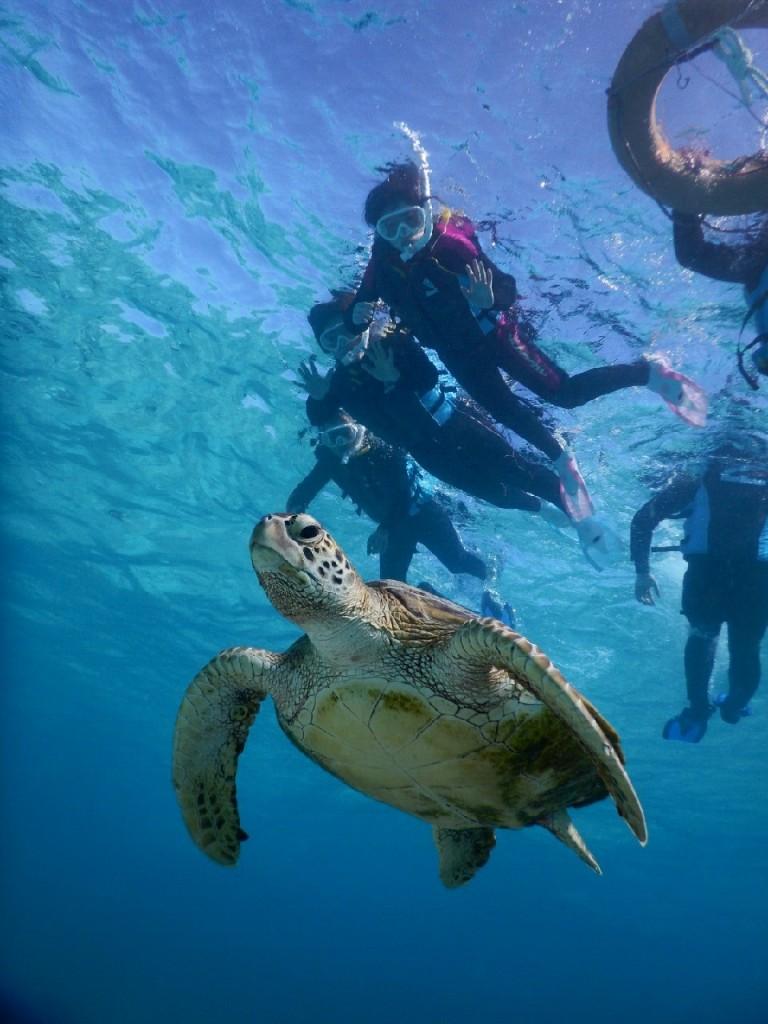 自力でもウミガメとシュノーケルできました