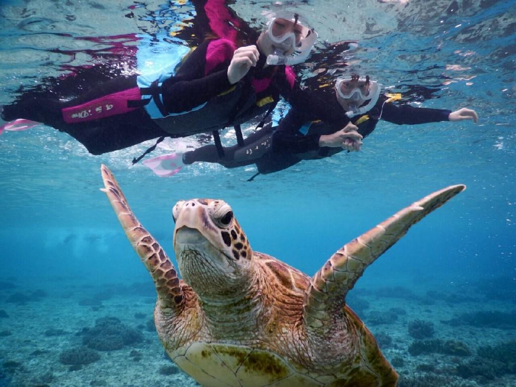 泳げなくてもウミガメシュノーケル大丈夫
