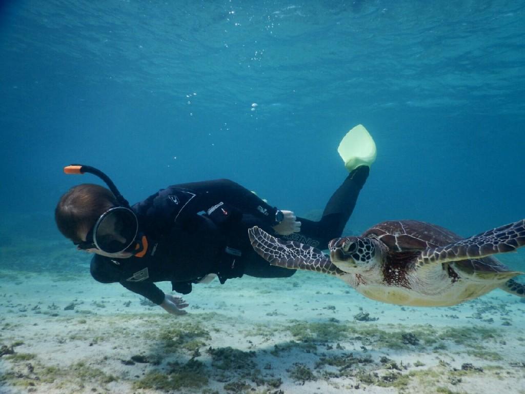 素潜りウミガメ見つけた