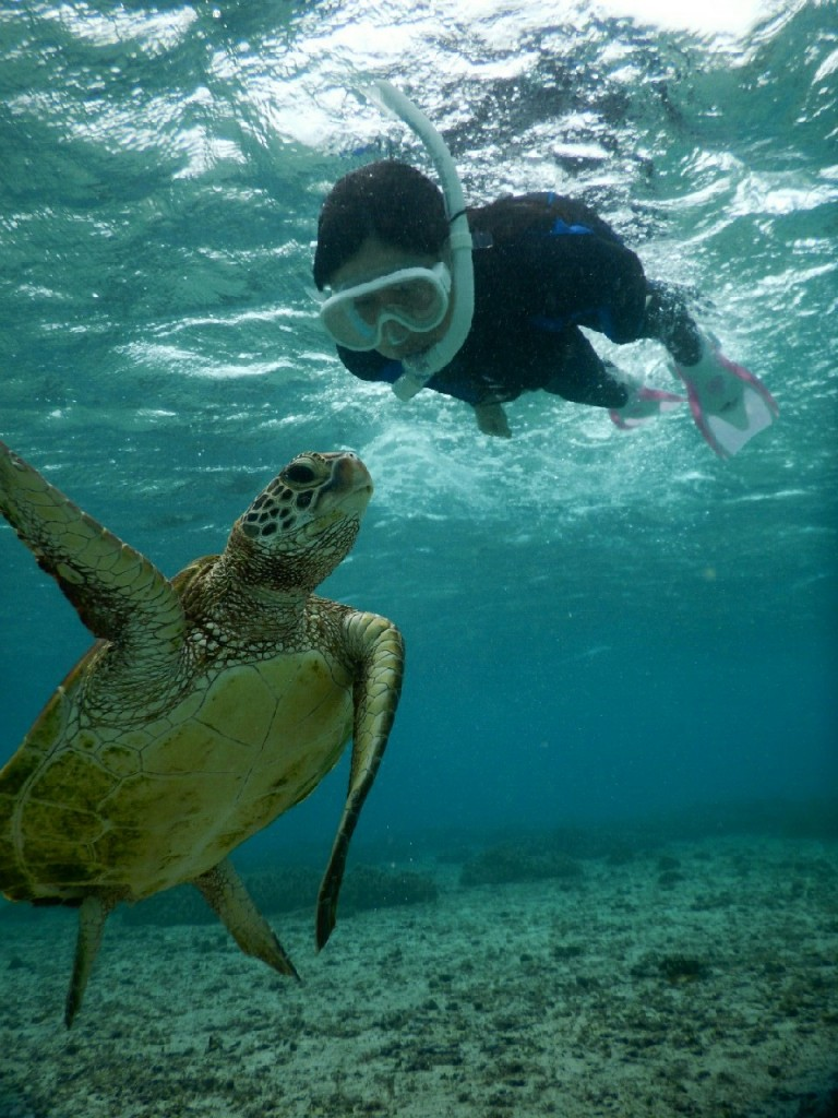 初素潜り、ウミガメにむかい