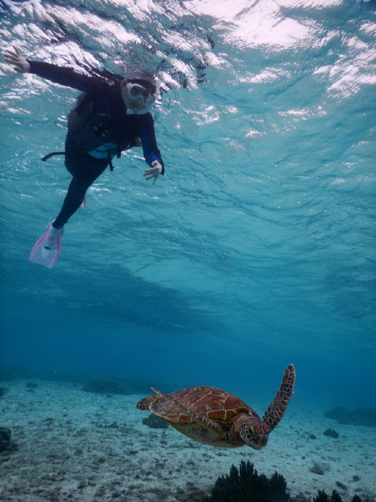 宮古島シュノーケルツアーで泳ぎに慣れウミガメ追跡