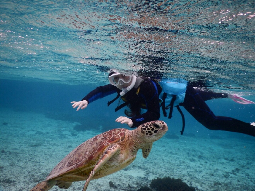 宮古島シュノーケルで反対に行くウミガメ