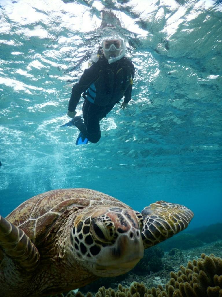 ドアップ宮古島のウミガメ