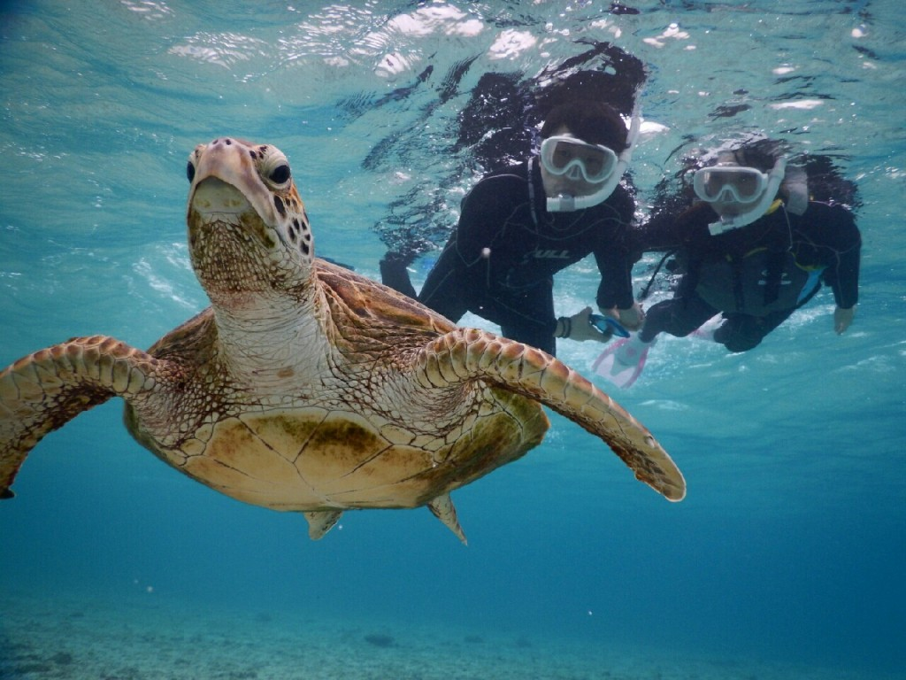 念願のウミガメと宮古島でのシュノーケル