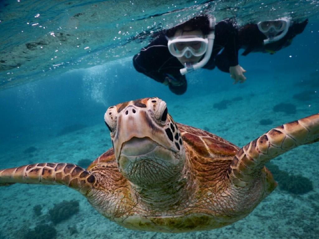水中写真でウミガメシュノーケルをアップ